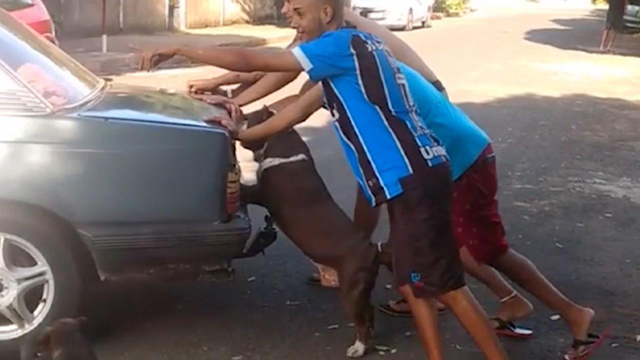 Cachorro ajuda a empurrar carro quebrado